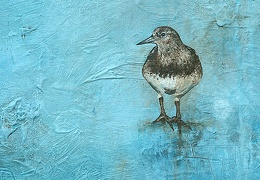 Black Turnstone - Help Yourself