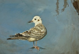 Coastal Gull - Heard The Name in The Silence