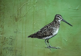 Common Snipe - Greenberg's Lament