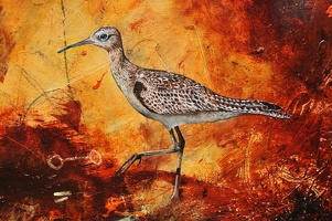 little curlew detail 1