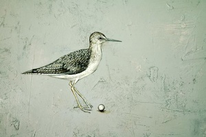 solitary sandpiper detail