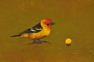 western tanager detail 1